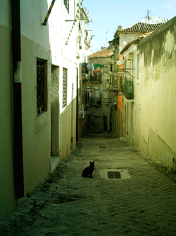 Alley cat - Alfama